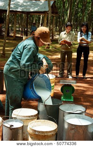 Worker weigh latex rubber at rubber plantation