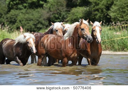 Batch Of Chestnut Horses In The Wather