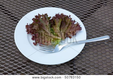 Lettuce Leaf on a Plate