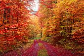 Magnificent autumn colors forest in October poster