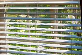 stock photo of louvers  - Window with blinds overlooking flower garden - JPG