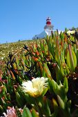 Lighthouse And Grass On Cape Roca