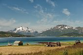 picture of lofoten  - Fishing and agriculture at Lofoten in northern Norway - JPG