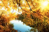 stock photo of greenery  - Golden autumn scenic at a river with the sun shining warmly through the golden leaves - JPG