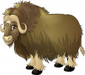 picture of yaks  - the yak who smiling to stand