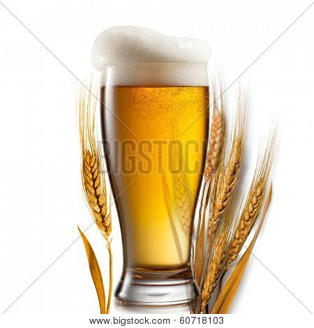 Beer in glass and wheat isolated on white background