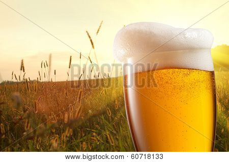 Glass of beer against wheat field and sunset