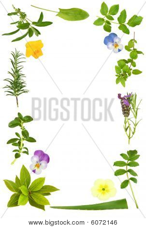 Bloem en kruid blad Frame