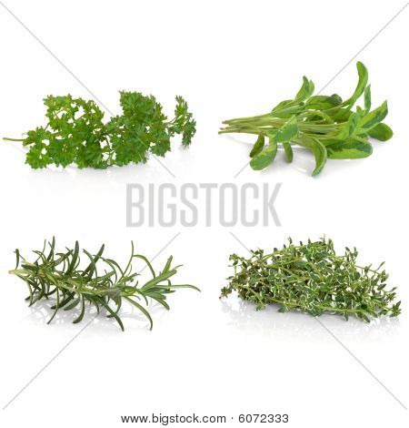 Parsley Sage Rosemary and Thyme Herbs
