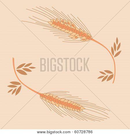 Spica vector illustration