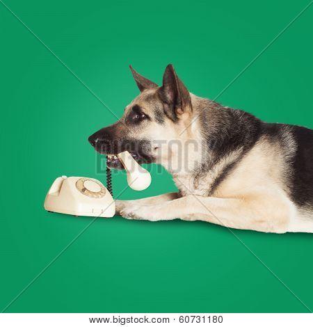 Dog Holding Handset