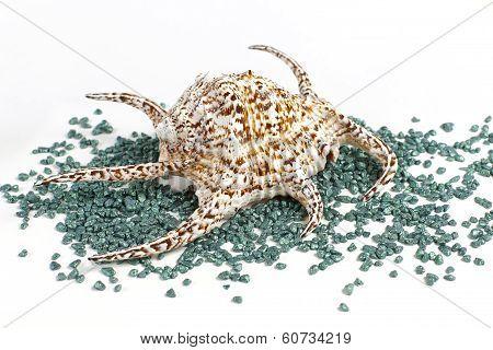 Sea Shell With Decorative Stones