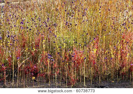 Bloom On Wet Ground Among Flower Grass