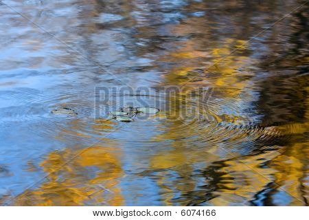 Autumn Leaves Falling In The Water