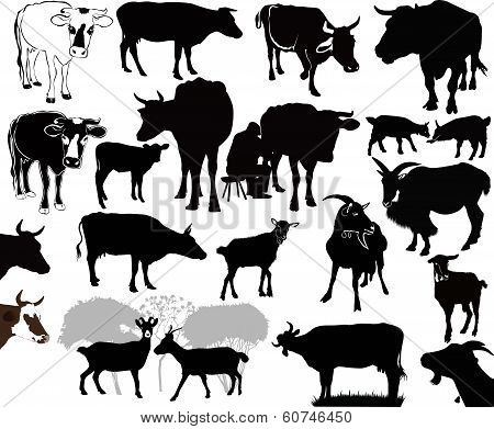 Cow goat animals calf isolated