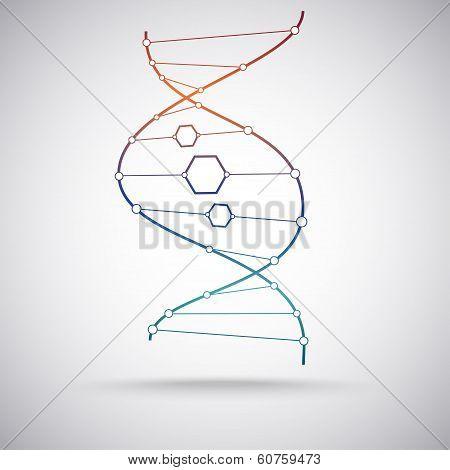 The Dna Molecule. Gradient