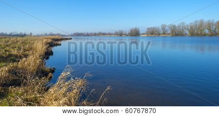 Grass and reed on the shore of a river