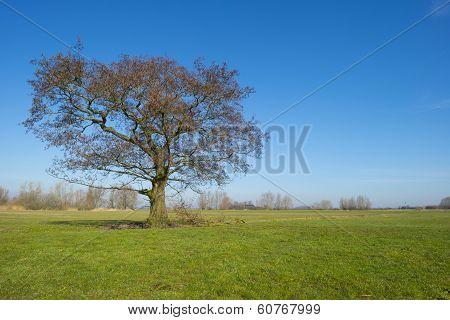 Tree in a sunny meadow in winter