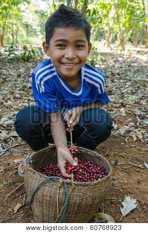 Lavan ethnic boy with coffee berries