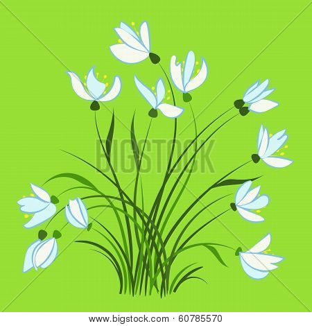 First spring flowers, snowdrops