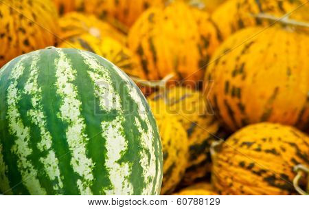 Organic Watermelon And Casaba Melon Heap