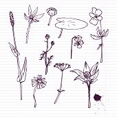 set of ink drawing herbs