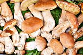 pic of porcini  - Closeup bunch of Porcini mushrooms at the market in Italy - JPG