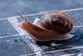 picture of olympiade  - snail crosses the finish line alone as winner - JPG