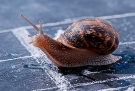 pic of olympiade  - snail crosses the finish line alone as winner - JPG