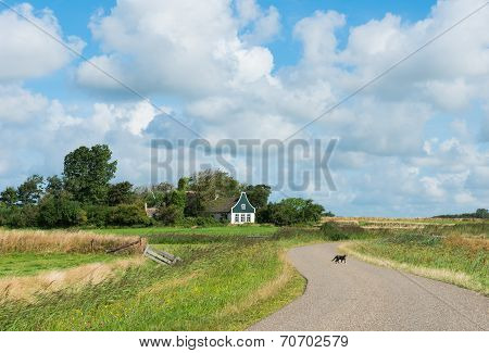 Cat On Road On Texel