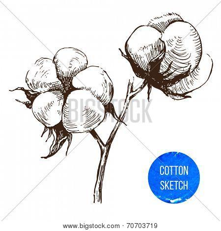 Hand drawn cotton brunch in vintage style