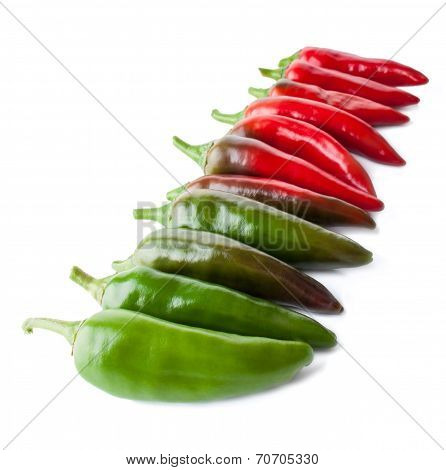 The Row Of Hot Peppers