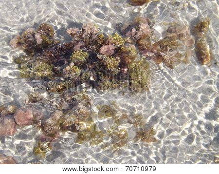 Nice seabed