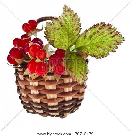 Wild Forestry  Stone Bramble berry (Rubus saxatilis)  in wicker basket close up isolated on white background