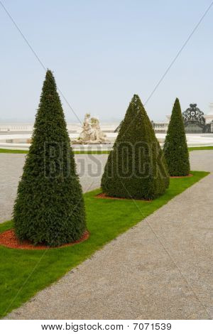 Pyramid Shaped Trees