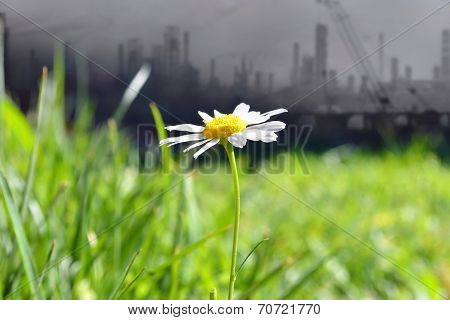 daisy wheel on industrial background