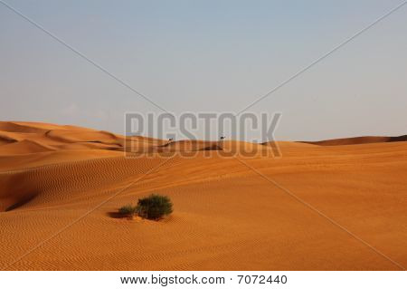 Lonely Desert Dunes