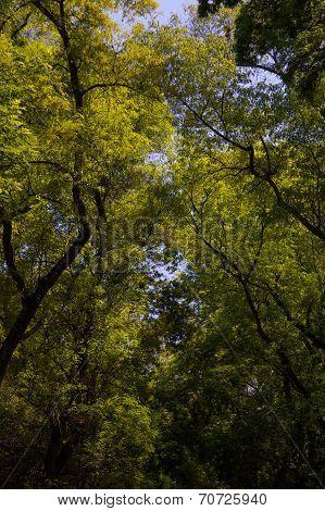Chapultepec Park Trees Df Mexico City