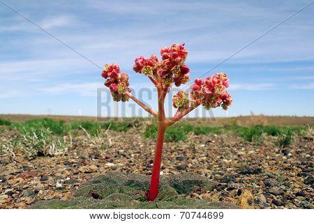 a strange flower