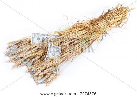 Ricos cultivos
