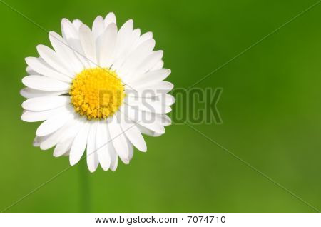 Abstract Daisy Background