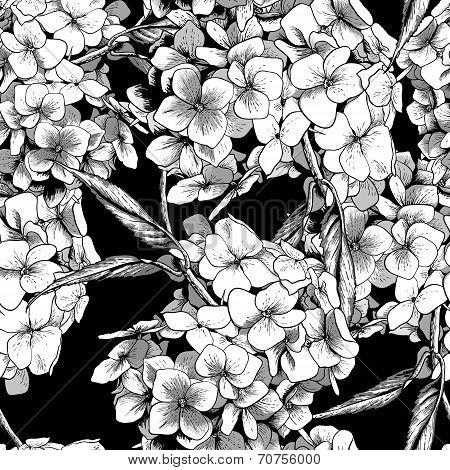 Monochrome Seamless Background with Hydrangea