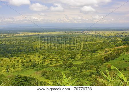 Panoramic View In The Plains Of Africa