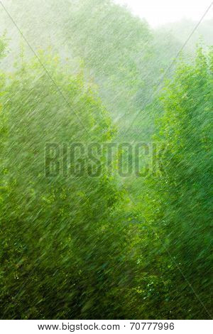 Rainy Outside Window Green Background Texture.