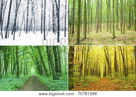 Four season of year in the wood