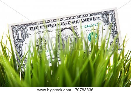 Dollar note in grass