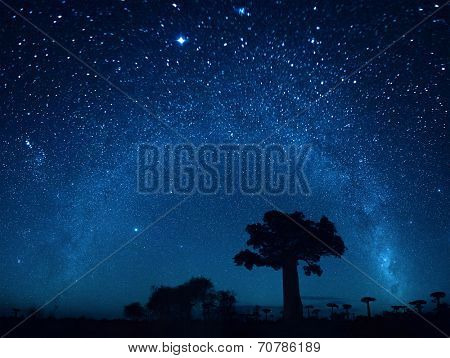 Starry sky and baobab trees. Blurred sky, focus on the tree