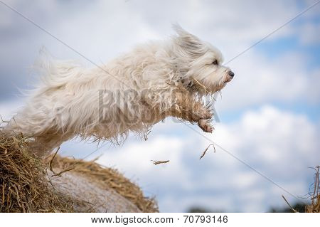A Dog Wants To Fly