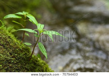 Small Plant on Moss-Covered Rock