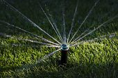 picture of sprinkler  - Water sprinkler watering grass in the sunset - JPG